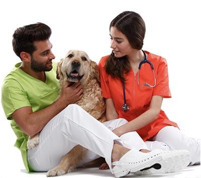 Medical Express Veterinaria nos dedicamos a la distribución de material y equipamiento para centros veterinarios